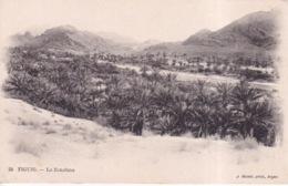 ALGERIE(FIGUIG) ARBRE(LA ZOUSFANA) - Algeria