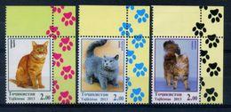 Tajikistan 2013 / Cats MNH Gatos Chats Katzen / Hi15  1-7 - Katten