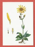 CP PLANTES MEDICINALES 5 Arnica - Heilpflanzen