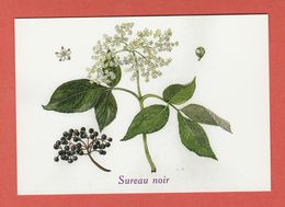 CP PLANTES MEDICINALES 7 Sureau Noir - Heilpflanzen