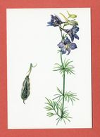 CP PLANTES MEDICINALES 9 Pied D'Alouette - Heilpflanzen