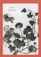 CP PLANTES MEDICINALES 10 Lierre Grimpant - Heilpflanzen