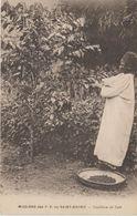 MISSIONS  DES P.P. DU SAINT ESPRIT CAMEROUN.   AU TRAVAIL. CUEILLETTE DU CAFE - Missie