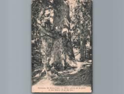 06-ALPES M- Environs De Peira Cava - Cpa Peu Courante - Arbre Géant De La Forêt De La Maïris - 7 M De Circ. - Frankreich