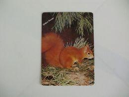 Squirrel Ecureuil Esquilo Gráfica Bocage Setúbal Portugal Portuguese Pocket Calendar 1988 - Formato Piccolo : 1981-90