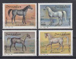 Somalia, 1995. [n0854] Horses - Horses