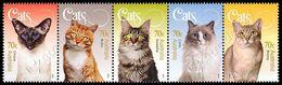 Australia 2015: Gatti / Cats ** - Domestic Cats