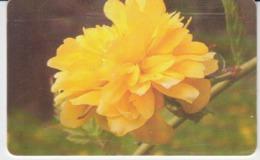 Romania Phonecard - Flowers Fleurs Blumen - 2 Scans - Blumen