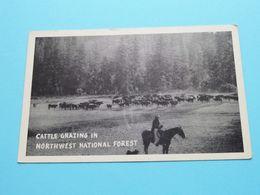 CATTLE Grazing In NORTHWEST National Forest ( Graucraft ) Anno 19?? ( See Scans Please ) ! - Etats-Unis