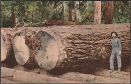 Giant Fir Logs Ready For The Mill, C.1910 - Edward H Mitchell Postcard - Etats-Unis