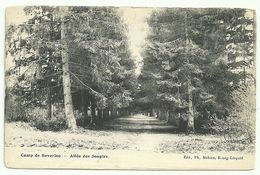 CAMP DE BEVERLOO  -  Allée Des Soupirs - Leopoldsburg (Camp De Beverloo)
