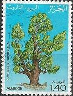 ALGERIA 1981 World Tree Day -1d.40 - Cypress Cupressus Dupreziana FU - Algérie (1962-...)