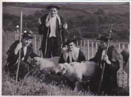 Photographie Châteaulin BLEUN BRUG De 1953 Les Gas De  Poullaouen Costume Folklorique & Moutons  Ref 1046 - Châteaulin