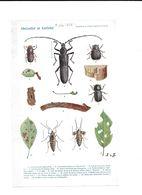 1924 ABRICOTIER ET CERISIER INSECTES - PLANCHE SUPPLEMENT PROGRES AGRICOLE ET VITICOLE 23.5*15 CM - F. Trees & Shrub