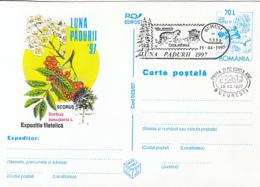 89542- ROWAN, MOUNTAIN ASH TREE, MUSHROOMS, FOREST'S MONTH, PLANTS, POSTCARD STATIONERY, OBLIT FDC, 1997, ROMANIA - Pilze