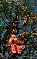CPM - TAHITI - TIPANIE FRANGIPANIER ... - Edition Sincere Photo - Tahiti