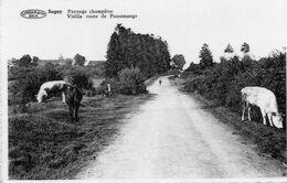 SUGNY : Paysage Champêtre, Vieille Route De Pussemange (photo Véritable) - Vresse-sur-Semois