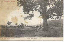 Carte Postale - CPA N°5586 VOSGES - SAINT DIE - L'Orme De St-Roch. - Saint Die