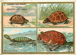 -chromo-ref CHA862- Chicorée Bleu Argent -arlatte Et Cie -cambrai - Nord - Tortues - Tortue - 11x8cms - - Trade Cards