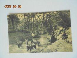 Scenes Et Types. Un Oued Dans L'Oasis. CAP 1261 - Algerien