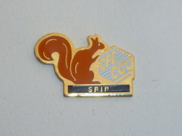 Pin's SYNDICAT, CFE CGC, SPIP, ECUREUIL - Verenigingen