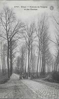 1549) Bilsen - Avenue De Tongres - Bilzen