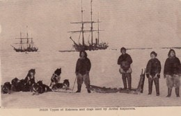 Eskimos And Dogs Used In North Pole Expedition Arctic Explorers, C1900s/10s Vintage Postcard - Other Famous People
