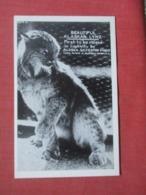 Alaskan Lynx Ref 4273 - Tierwelt & Fauna