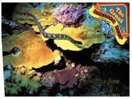 (H 10) Australia - QLD - Palm Bay Sea Snake & Yellow Plate Coral - Fische Und Schaltiere