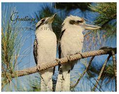 (H 10) Australia - NSW - Nelson Bay Kookaburra Birds - Vögel