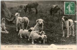 41ms 348 CPA - CHIENS DE MONTAGNE (small Tear) - Perros