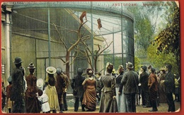 AMSTERDAM - Drukwerk - Apenkooi In Artis - Circulée 1907-   Scans Recto Verso - Amsterdam