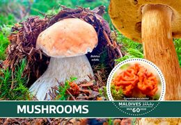 Maldives. 2020 Mushrooms. (0101b)  OFFICIAL ISSUE - Funghi