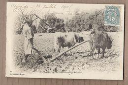 CPA ALGERIE - Le Labourage En Kabylie - TB PLAN AGRICULTURE ATTELAGE Boeufs 1905 - Professions