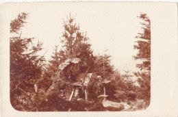 Non Située (Carte Photo) - En Forêt - Appareil - Postales