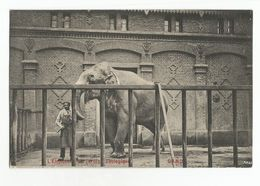 Gent L'Elephant Du Jardin Zoologique Oude Postkaart Gand Carte Postale Ancienne - Gent