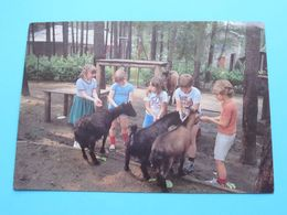 Domein DIESTERWEG Acacialaan Kalmthout Heide ( SOK ) Anno 1985 ( Zie/voir Photo ) ! - Kalmthout