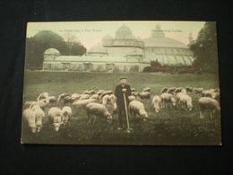 LAEKEN 1911 - LES SERRES DANS LE PARC ROYAL - METIERS / BEROEPEN BERGER - ED. MANGELSCHOTZ - Laeken