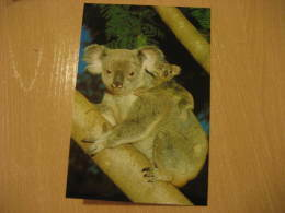KOALA MARSUPIAL Mammals Postal Stationery Card Australia - Timbres