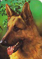 Portugal-   2-Calendários  1986  Cães - Small : 1981-90