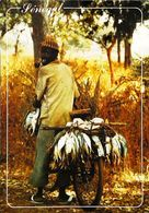Cpm VÉLO  -  Transport De Poissons En Casamance Sénégal - Timbre Collection Verso - Senegal