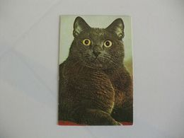 Cat Chat Gato Russian Pocket Calendar 1989 - Small : 1981-90