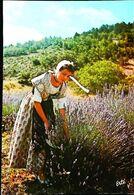 CPSM 1958  Cueillette   Lavande - Cultures