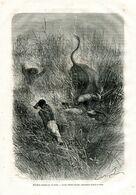 Antique Engraving 1874 Africa Hunting Hunter Attack Bull Buffalo Horns - Estampes & Gravures