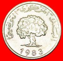 · OAK TREE: TUNISIA ★ 5 MILLIEMES 1983 MINT LUSTER! LOW START ★ NO RESERVE! - Tunisia