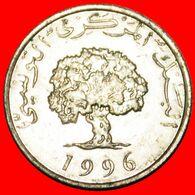 · OAK TREE: TUNISIA ★ 5 MILLIEMES 1996 MINT LUSTER! LOW START ★ NO RESERVE! - Tunisia