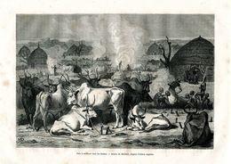 Antique Engraving 1874 Africa Bull Cow Herd Cattle Horns Hooves - Estampes & Gravures