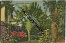 Florida - Travelers Palm - Etats-Unis