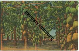 Florida - Papaya Plantation - Etats-Unis