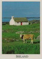 CPM Irlande, Typical Irish Cottage - Irlande